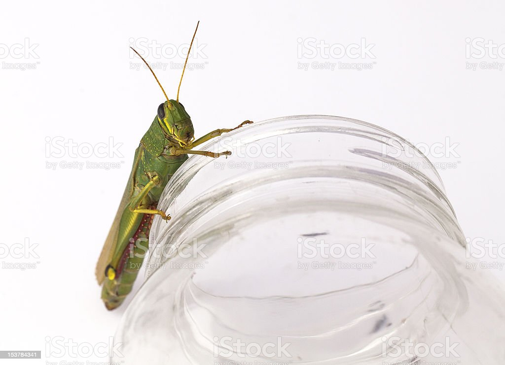 Grasshopper On A Glass Jar royalty-free stock photo