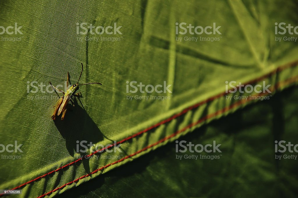 grasshopper on a tent royalty-free stock photo