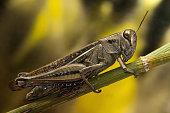 Grasshopper on Fennel