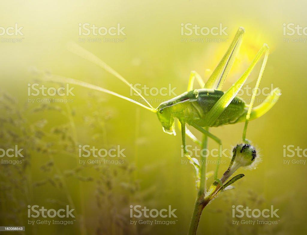 Grasshopper on flower stock photo