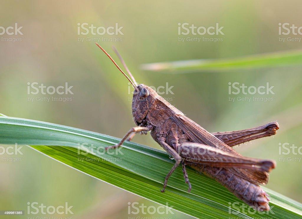 grasshopper on leaf stock photo