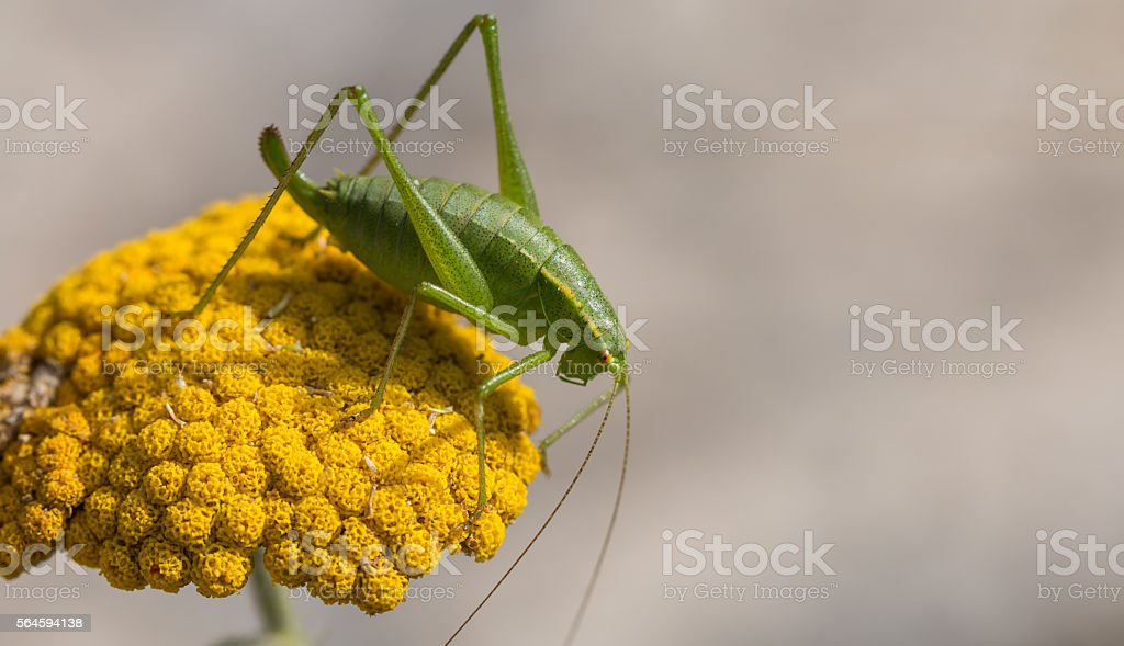 grasshopper on the grass stock photo