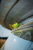 Grasshopper on the windshield of a car