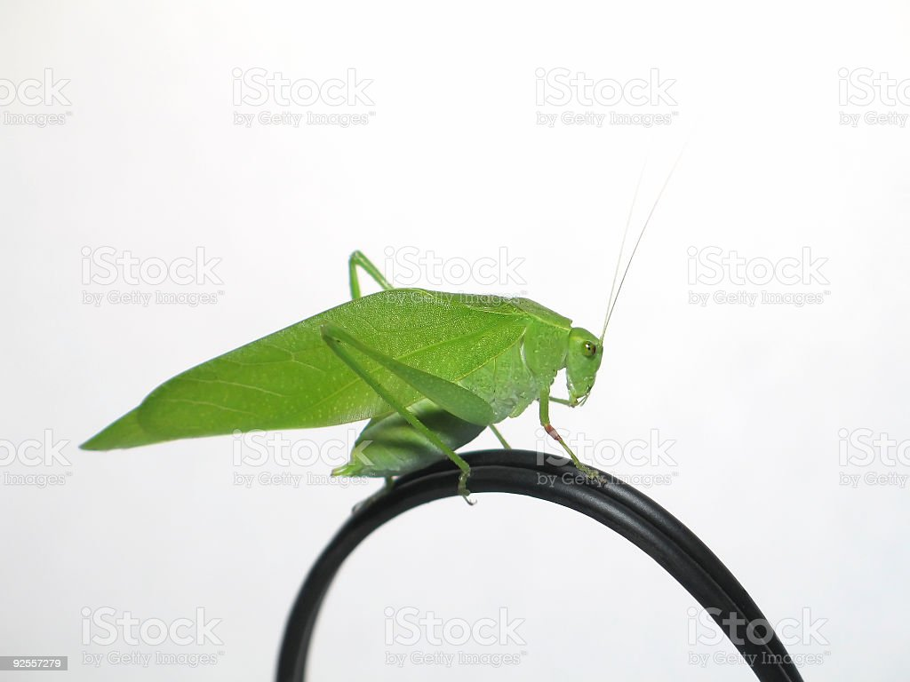 Grasshopper on wire royalty-free stock photo