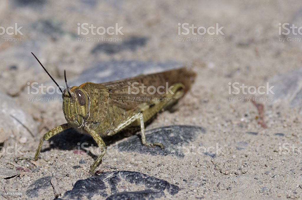 grasshopper stock photo