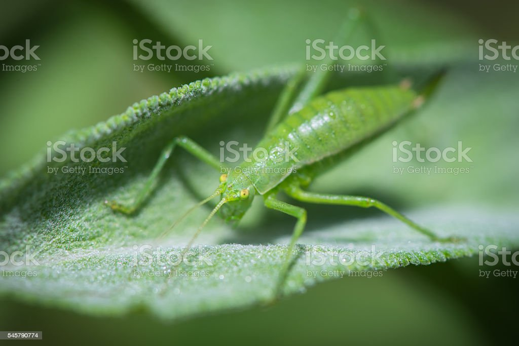 Grasshopper resting on the grass stock photo