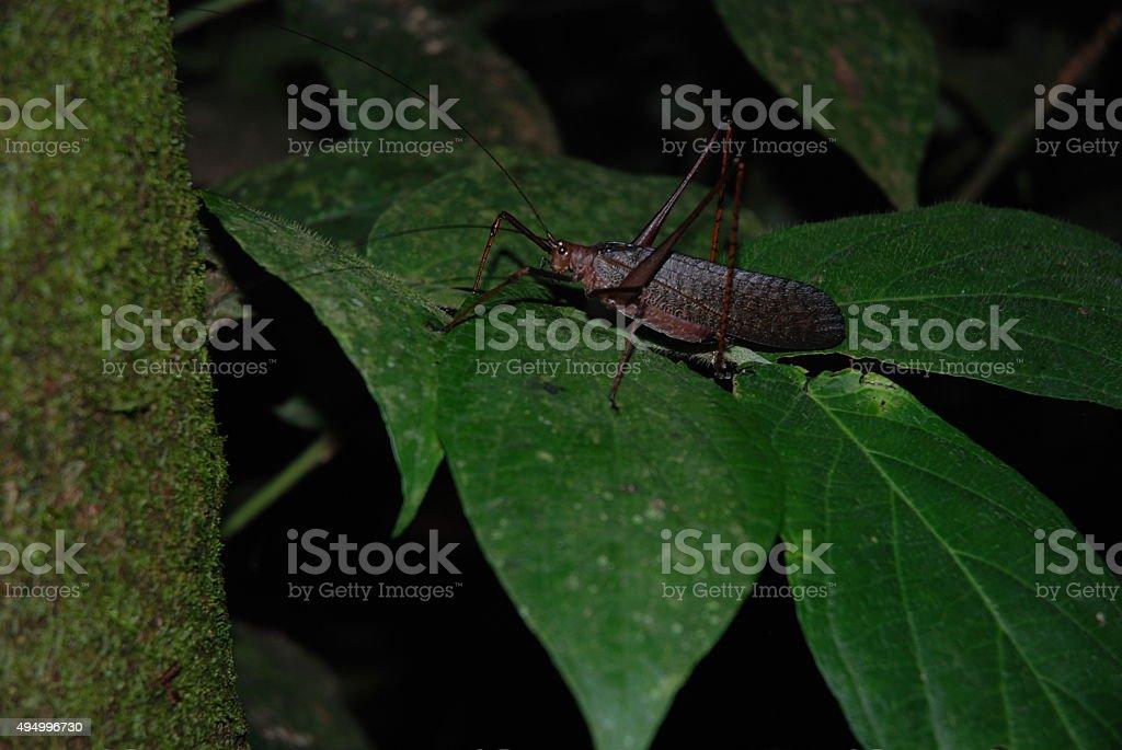 Grasshopper Sitting on a Leaf royalty-free stock photo