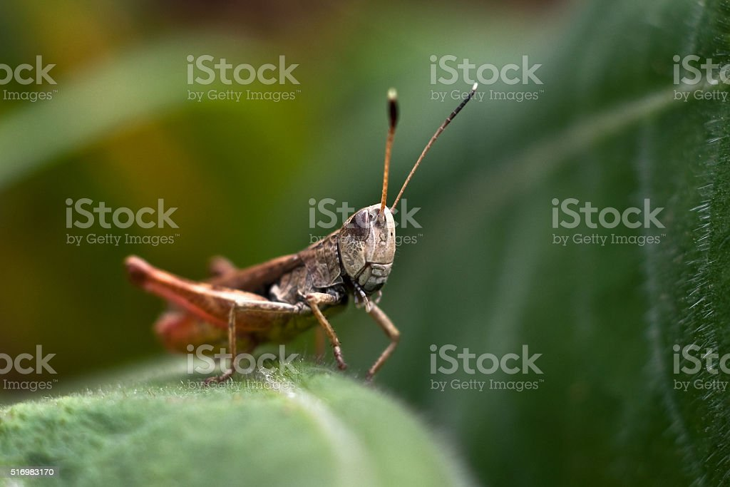 Grasshopper sitting on a leaf stock photo