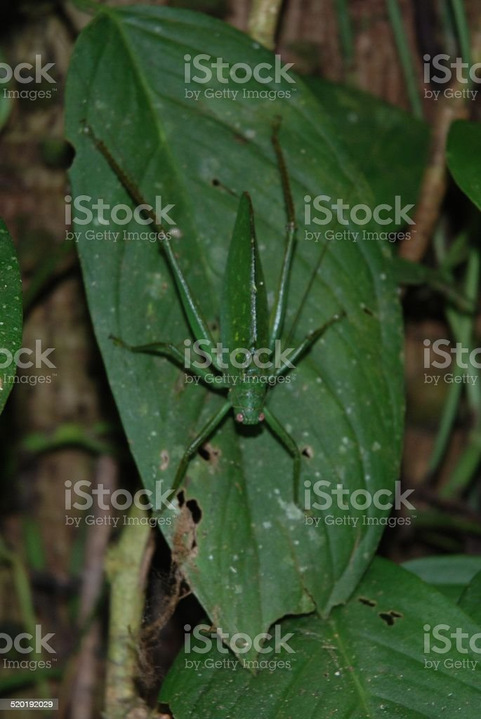 Grasshopper Sitting on a Leaf stock photo