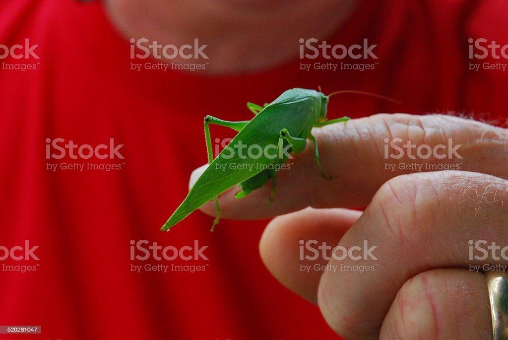 Grasshopper Sitting on a Man's Finger royalty-free stock photo