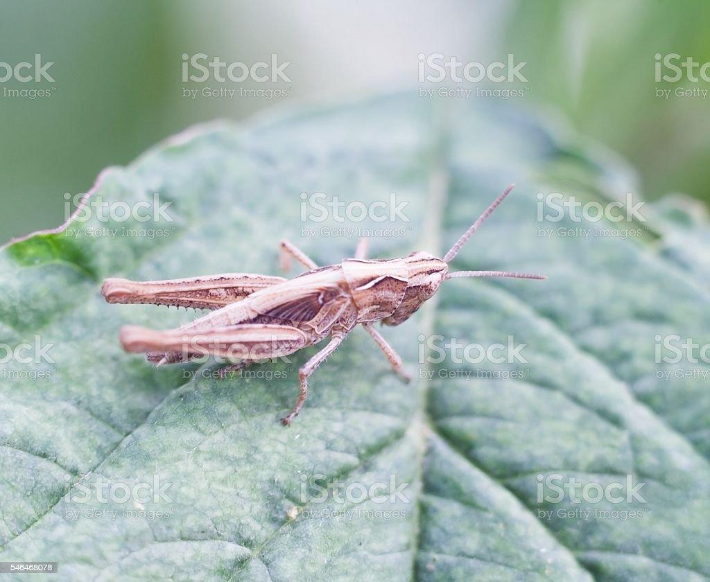 Grasshopper sitting on plant stock photo