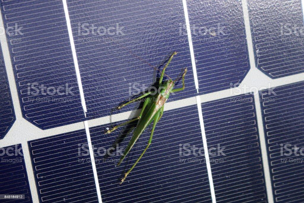 Grasshopper subathing on a solar module stock photo