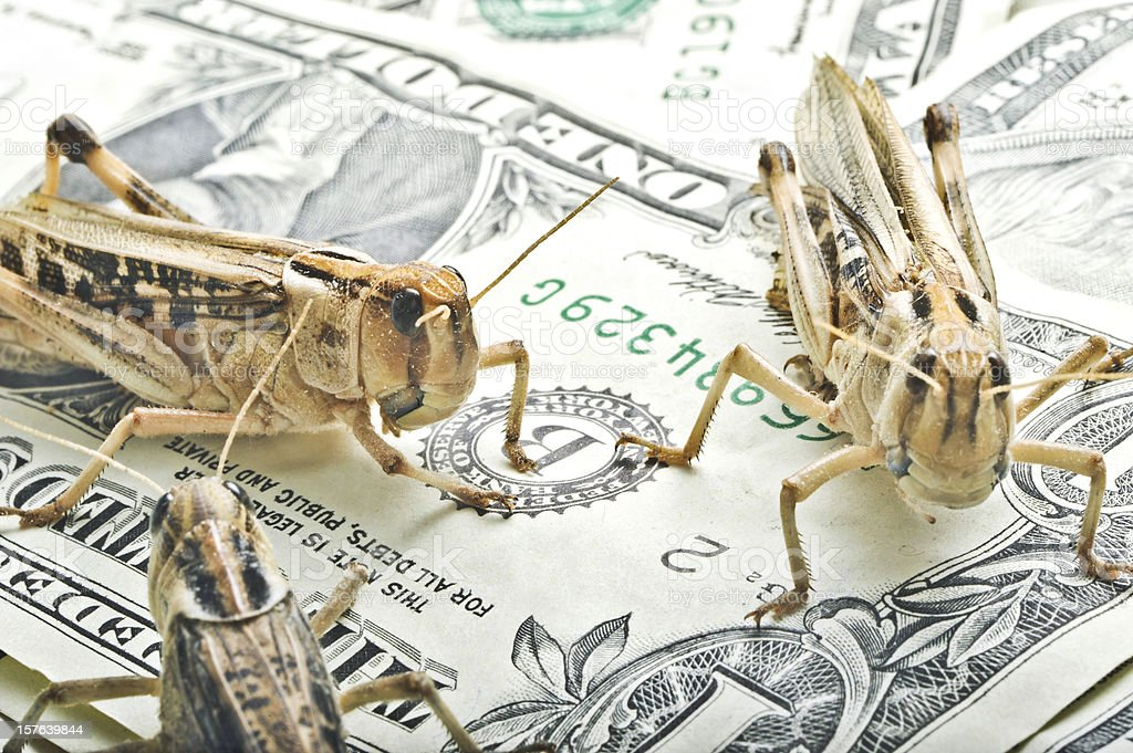 grasshoppers on dollar notes - finance theme royalty-free stock photo