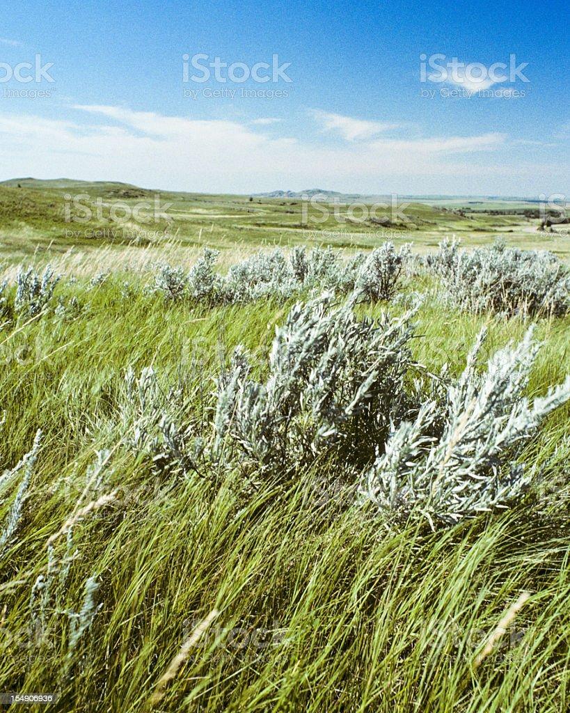 Grassland and sagebrush on a sunny day stock photo