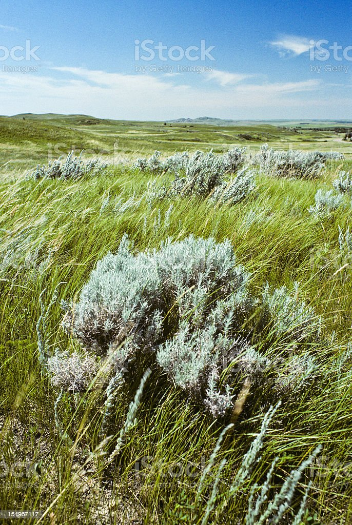 Grassland and Sagebrush stock photo