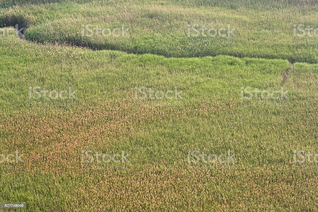grassland in Korea South. stock photo