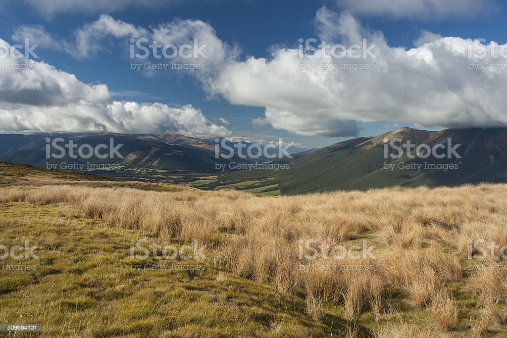 grassland in Nelson Lakes National Park stock photo