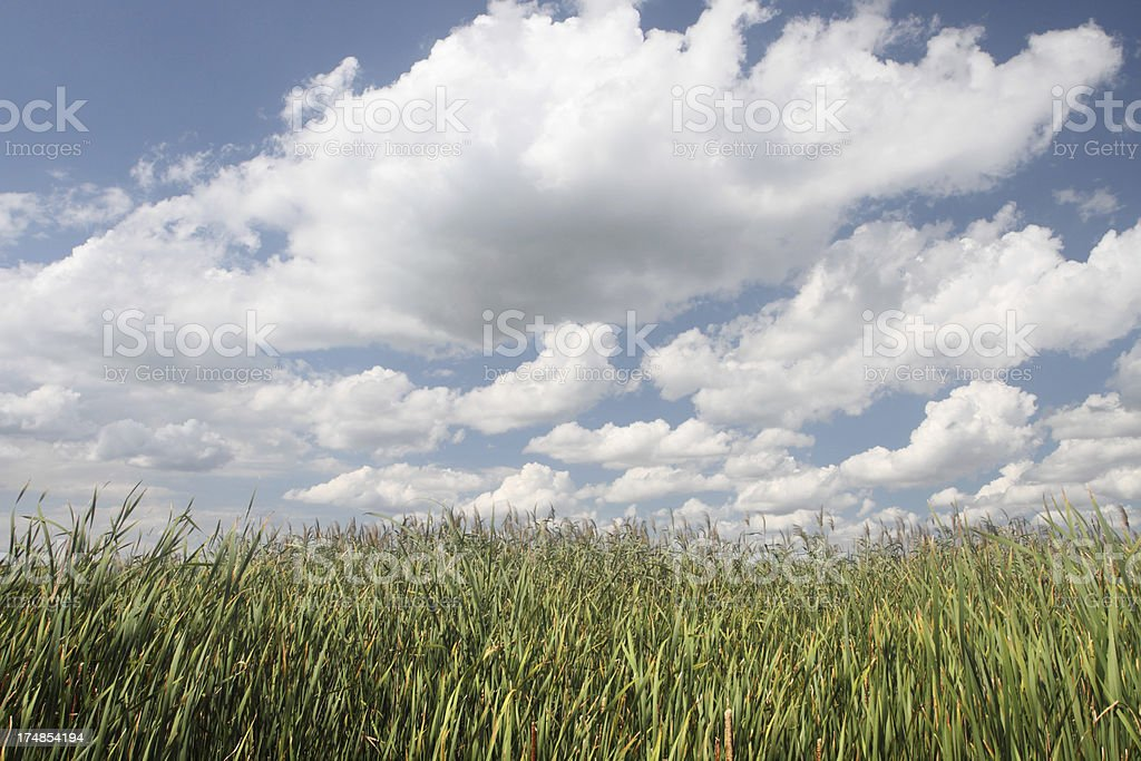 Grassland in Point Pelee National Park royalty-free stock photo