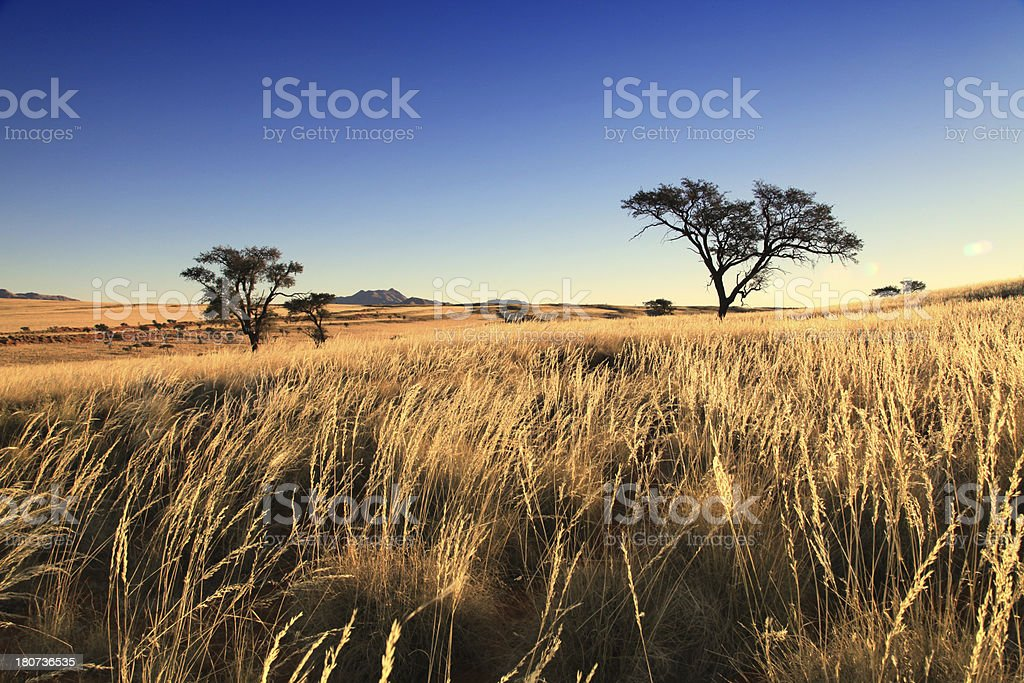 Grassland  Landscape, Namib-Naukluft National Park, Namibia, Africa. stock photo