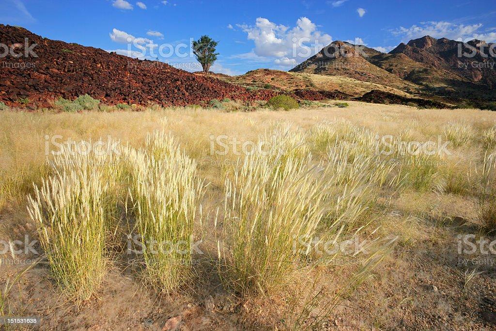 Grassland landscape stock photo