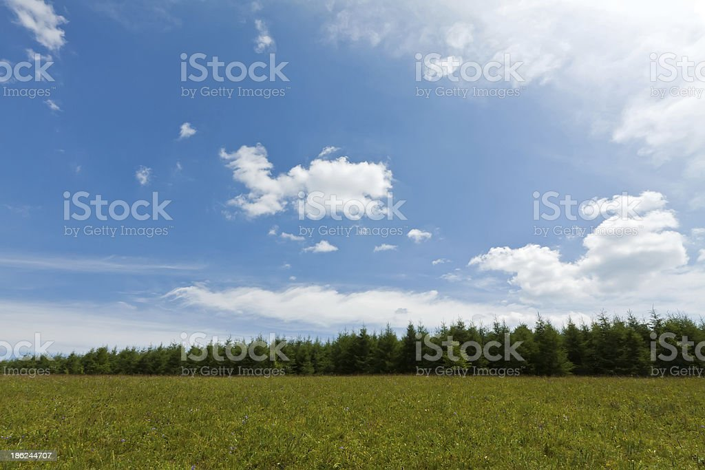 grassland landscape royalty-free stock photo