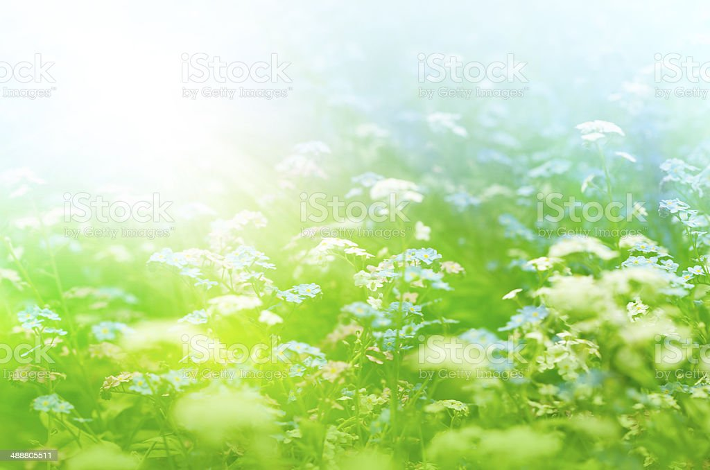 Grassland Of Wildflowers - With Copy Space royalty-free stock photo