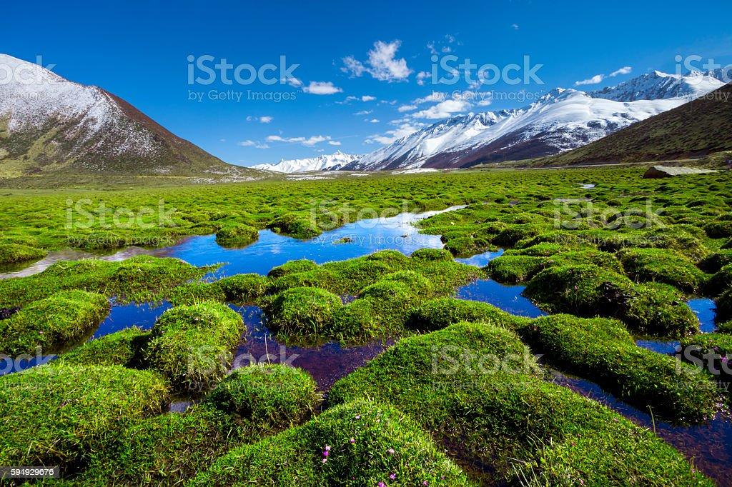 grassland on plateau stock photo