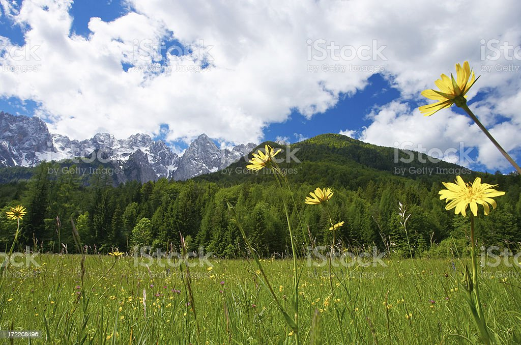 Grassland royalty-free stock photo