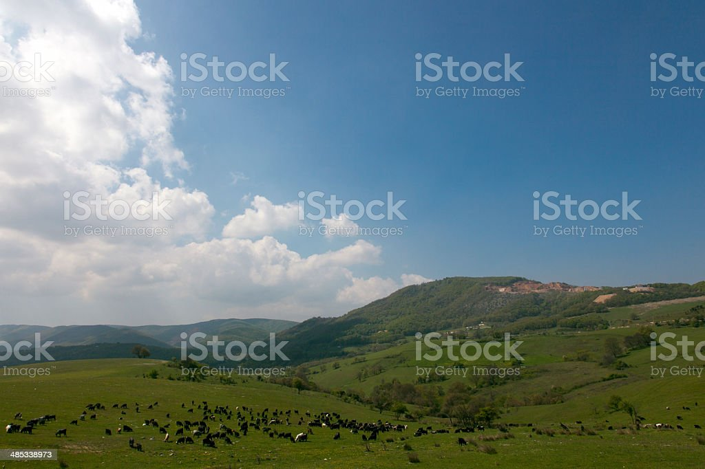 grassland with goats stock photo