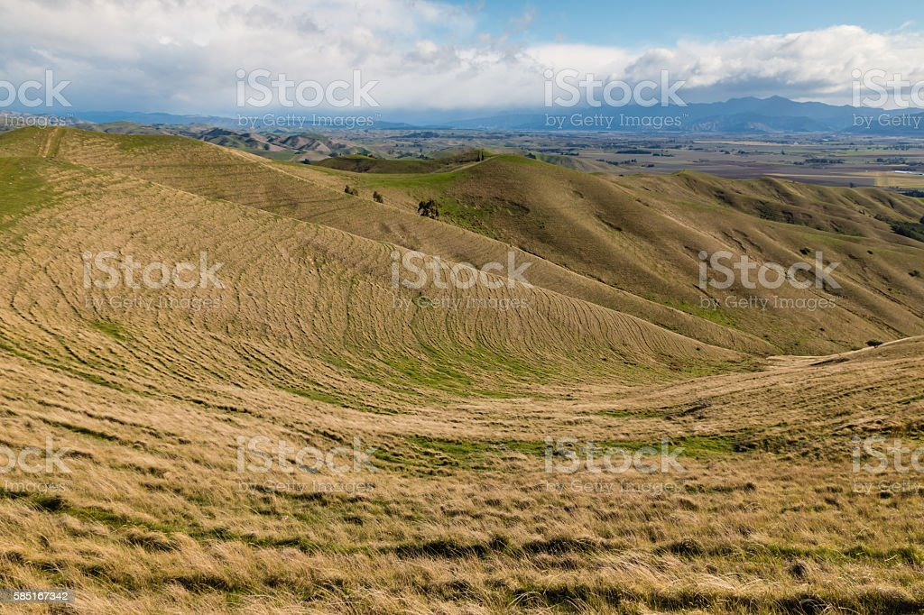 grasslands at Wither Hills in New Zealand stock photo