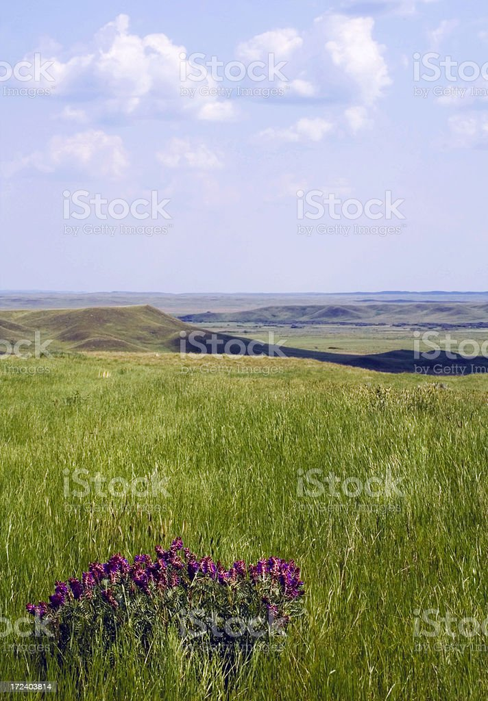 Grasslands National Park of Canada royalty-free stock photo