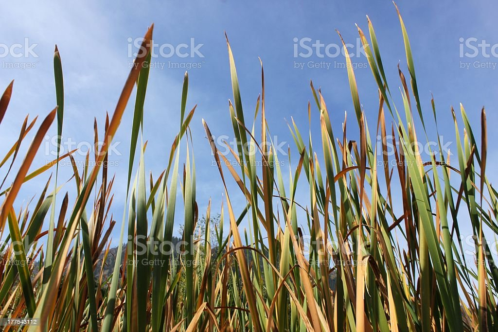 grass-level view stock photo