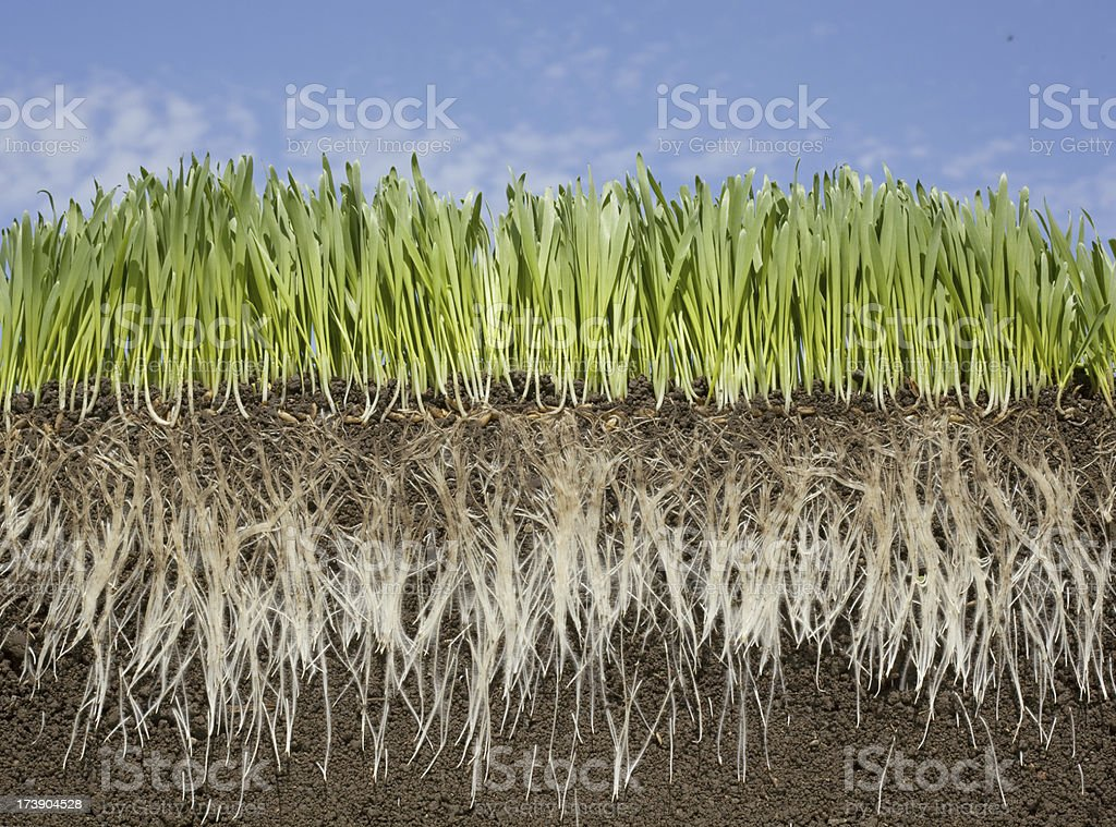 grassroots soil and sky royalty-free stock photo