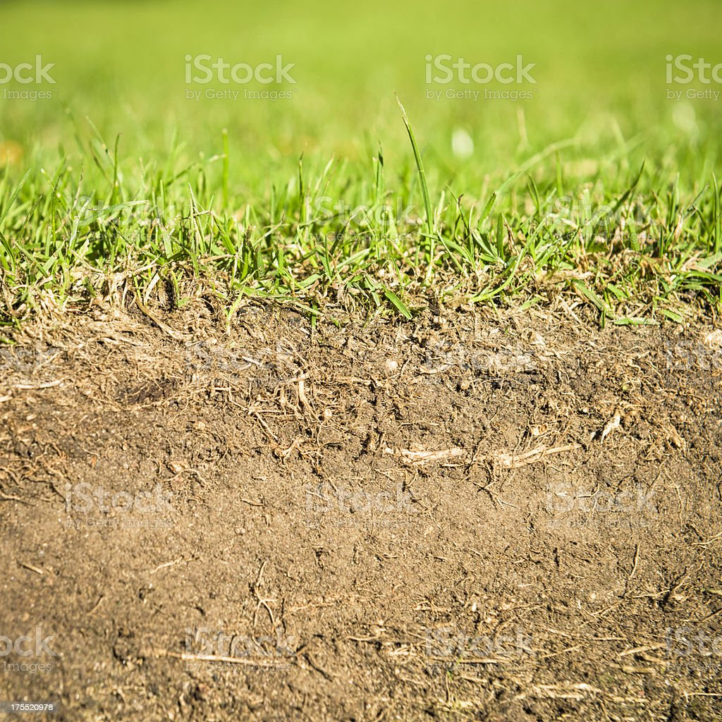 Grassroots - Soil Section stock photo