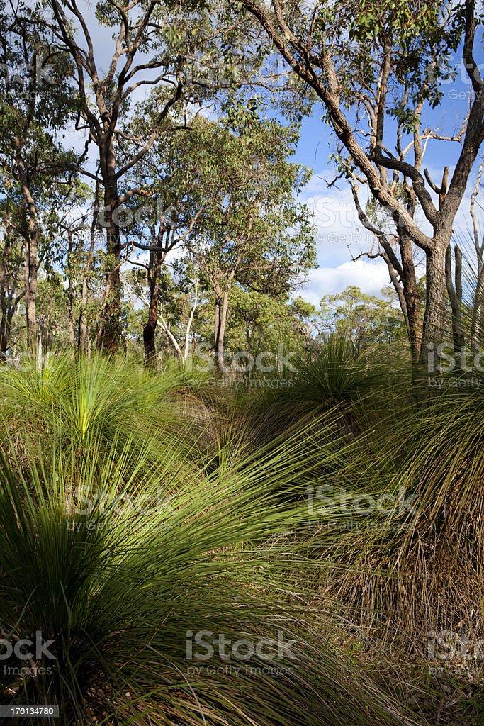 Grasstree stock photo