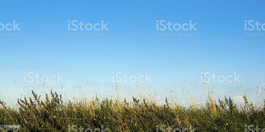 Grassy bank, late afternoon royalty-free stock photo