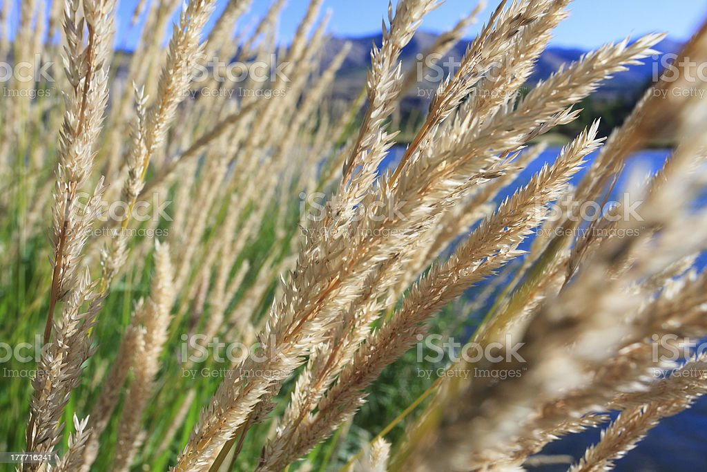 Grassy Bank royalty-free stock photo