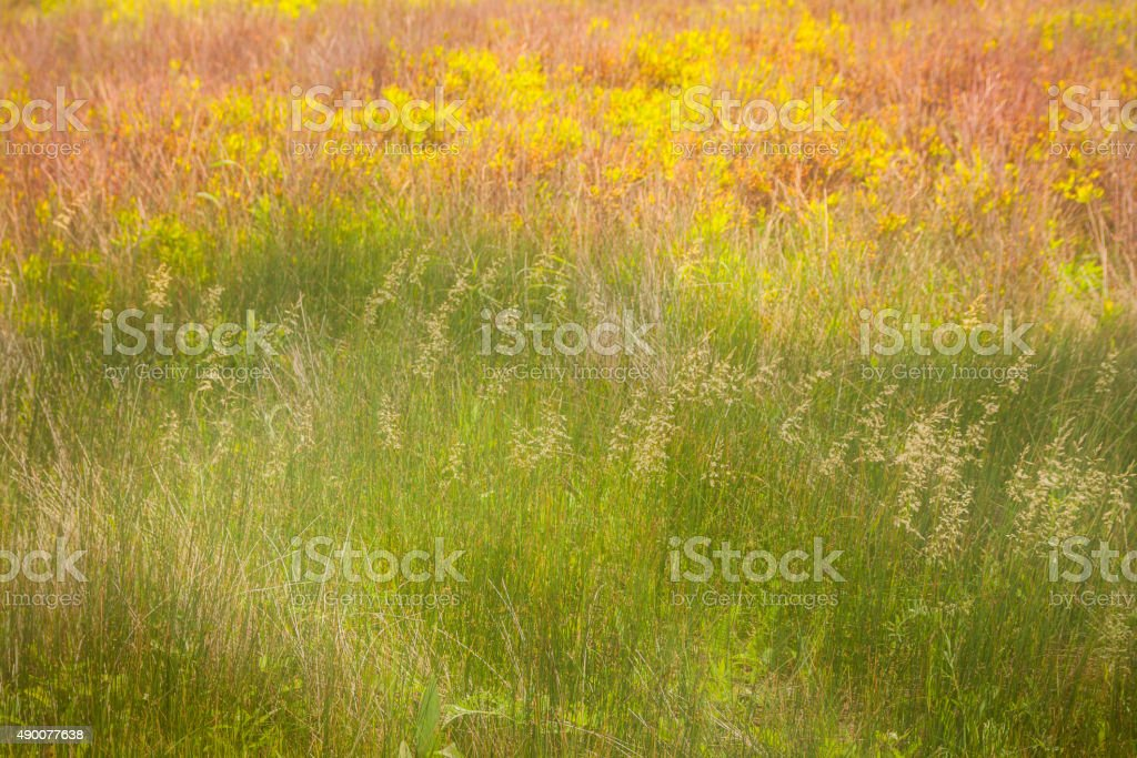 Grassy Field on a Summer Day with Watercolor effect stock photo