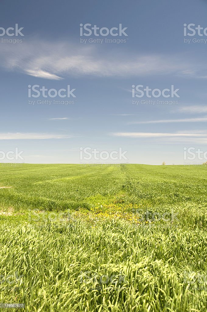 Grassy Field royalty-free stock photo
