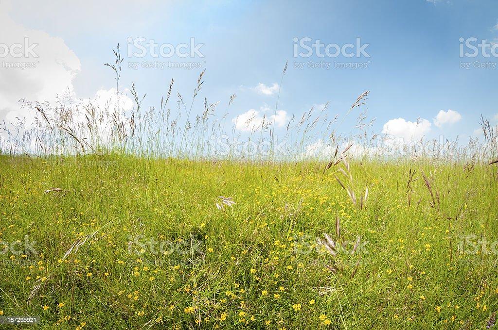 Grassy Field Under A Blue Sky royalty-free stock photo
