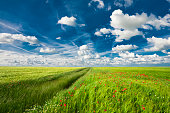 Spring landscape field with blue sky
