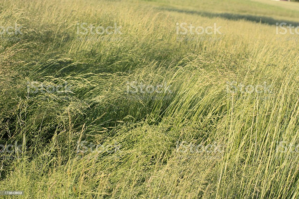 Grassy Fields of Dairy Farm stock photo