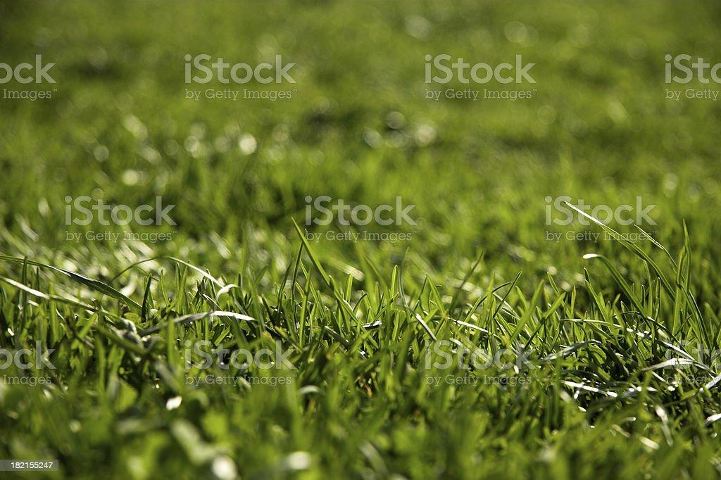 grassy gras! stock photo