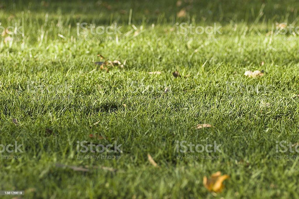 Grassy green hill in dappled light stock photo