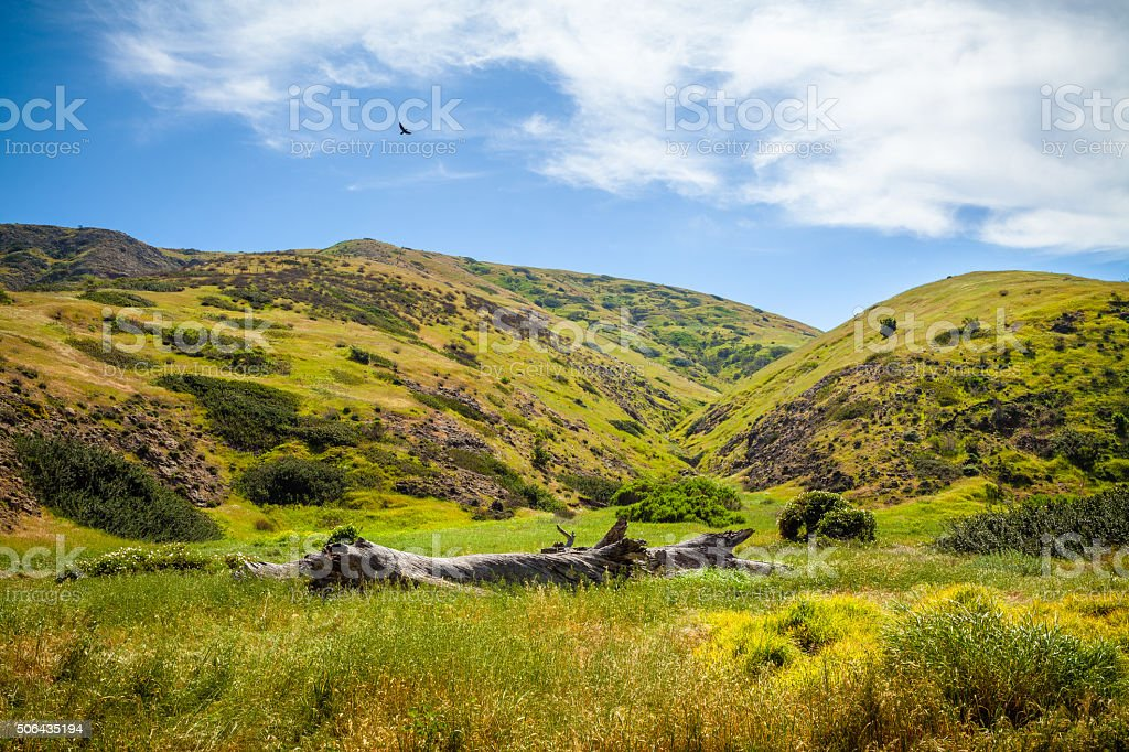 Grassy Hills On Eastern End of Santa Cruz Island, California stock photo
