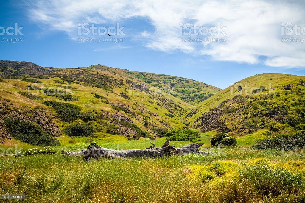 Grassy Hills On Eastern End of Santa Cruz Island, California stock photo