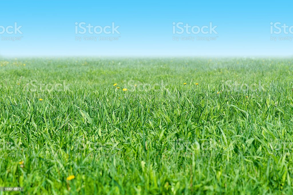 Grassy meadow and the blue sky royalty-free stock photo
