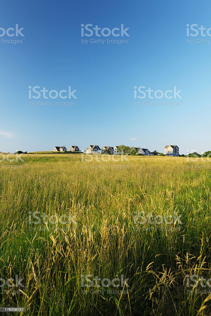 Grassy meadow royalty-free stock photo