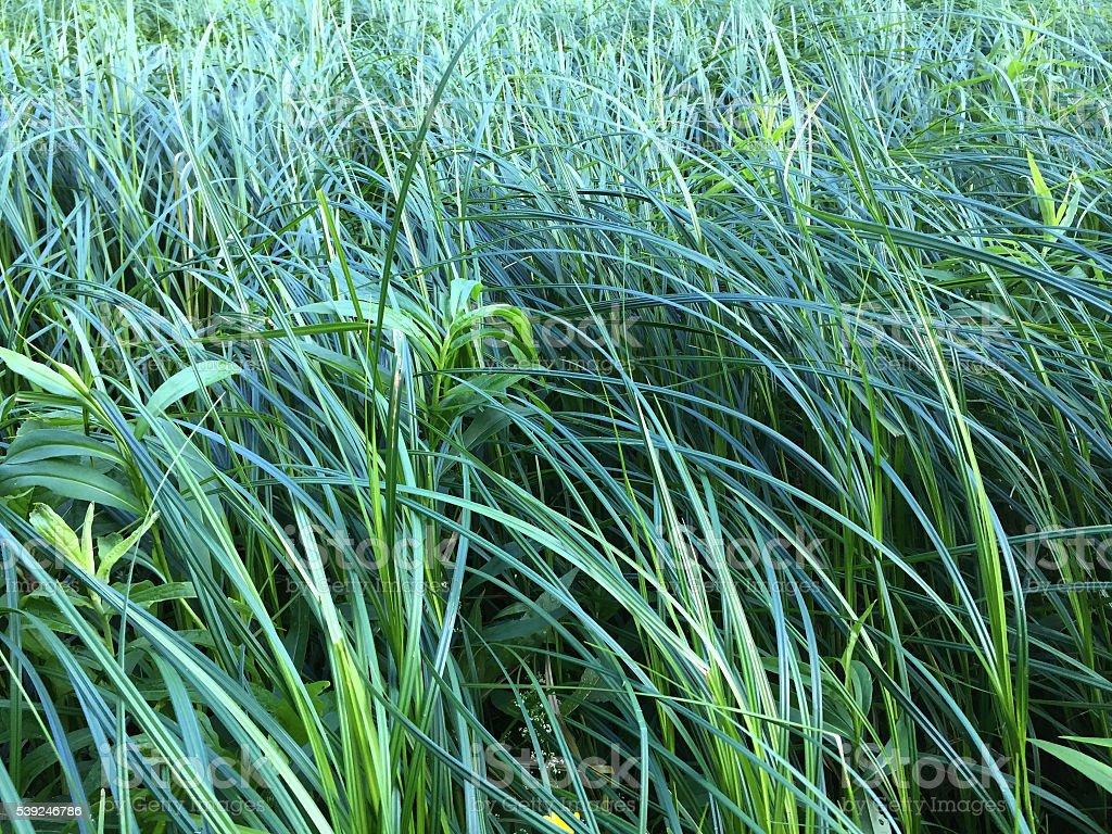 Grassy Meadow stock photo