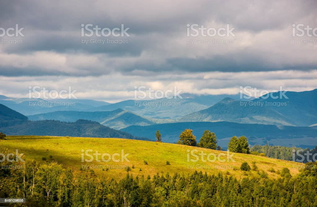 grassy meadow with few trees on hill stock photo